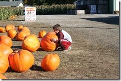 pumpkin-patch-008
