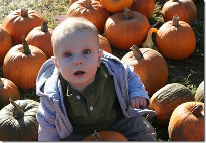 pumpkin-patch-114