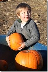 pumpkin-patch-228