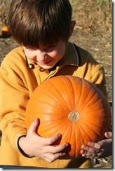pumpkin-patch-230